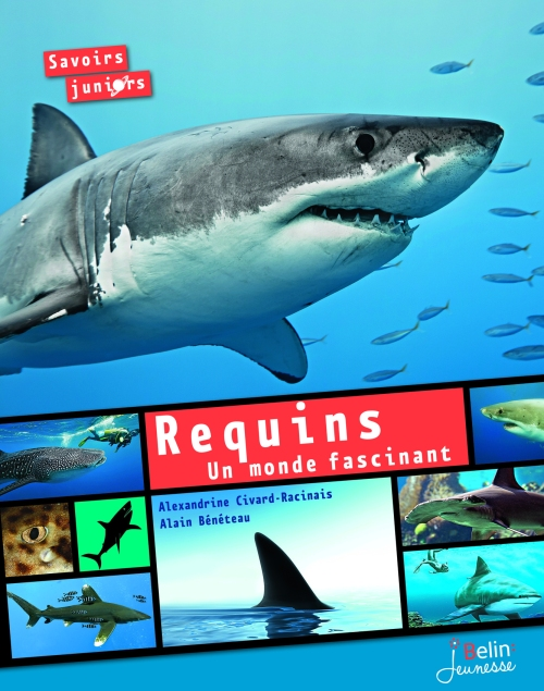 7779_Requins_couv_OK.indd